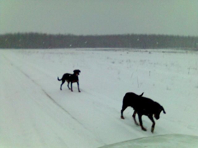 Kopófutás a hóban