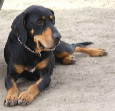 SSM Zsalya erdelyi kopo szuka kutya