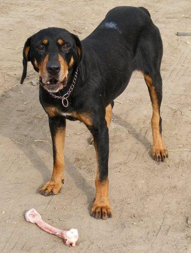 SSM Zsalya etrdelyi kopo szuka kutya 4