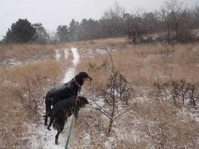 zenta es iris a havas muzsla turan
