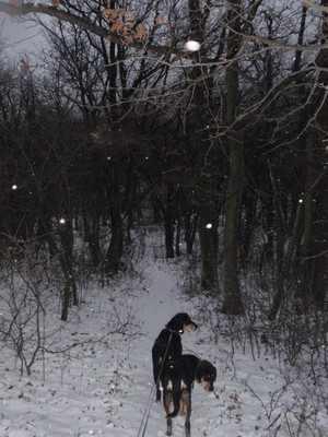 erdelyi kopok a havas muzsla-turan