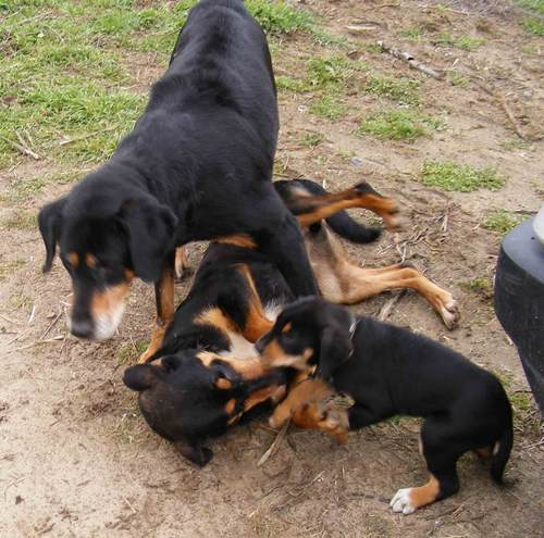 17. kép: Zenta-Irha 5. Zenta ellép Irha fölül, amely kutya kicsit lazíthat a megadásán