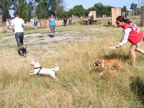 Felugyelet mellett jatszanak a kutyusok az ovodaban