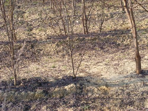 Az őzek ösvénye a hurok-tartó fák felé...