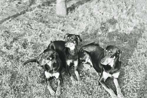 Első kopóim, Pamela, Boszika, Doris