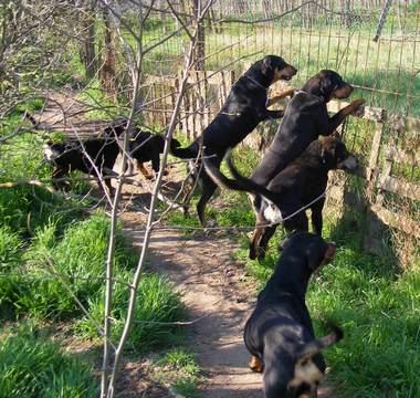 72. kép. A Macskavadász falka idegen kutyát jelez a kerítésen kívül