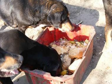 58. kép .Zigi morog Zsarnokra, Szeder, Zigi lánya mellette eszik