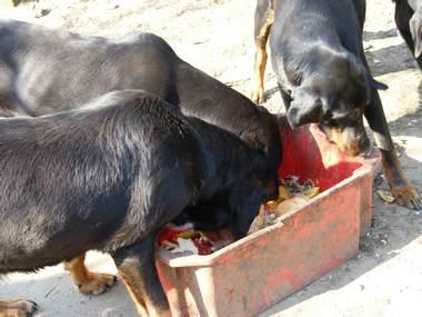 62. kép Később Zigi és lánya, Narancs a pirosból eszik, Opált elküldik