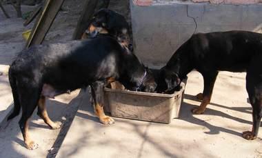 68. kép. Zenta és Szeder eszik, Gesztenye vár