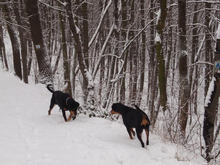 Kopók a hóban