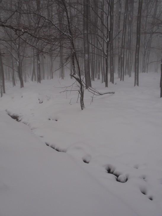 Patak a hó alatt